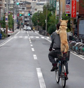 a_dog_riding_the_bicycle