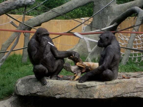 cgy-gorilla-knife