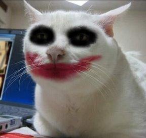 how to tick people off - serious cat joker ;)