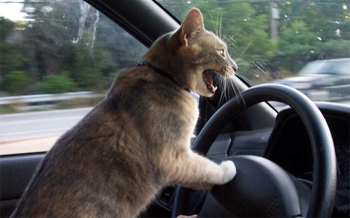 You know what they say about cat drivers, right?