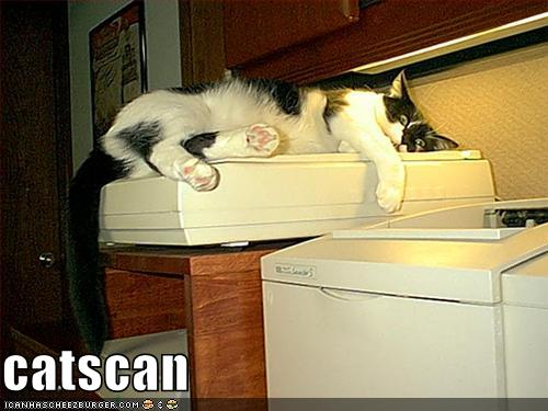 funny-pictures-cat-scans-himself