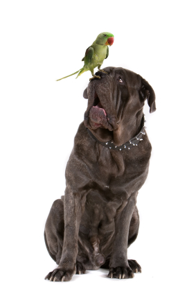 parrot-and-dog