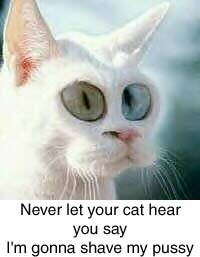 scarycat