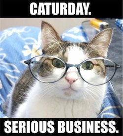 caturday - serious business