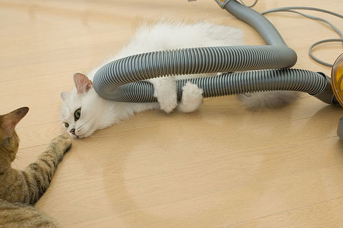 Some just get wacked out on catnip and get stuck in a pipe dream