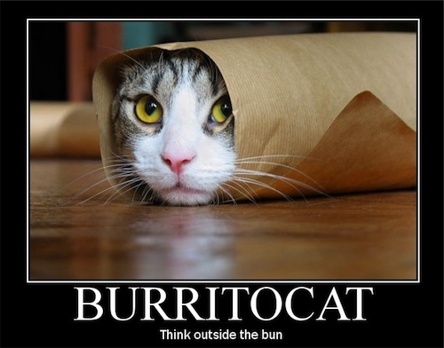 buritto-cat