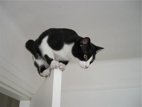 Some cats make good door decorations