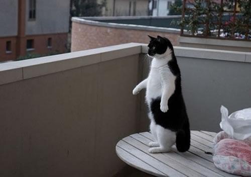 standingcat