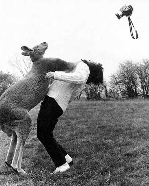 angry_kangaroo